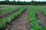 Farm pics 2012 027