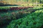 Farm pics 2012 033