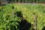 Farm pics 2012 036