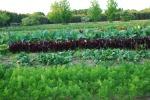 Farm pics 2012 104