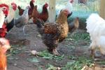 Farm pics 2012 179